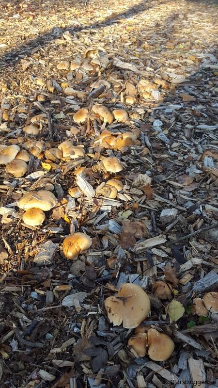 En matta med oätlig svamp.